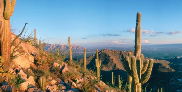 Garner Group Properties, Tucson Real Estate